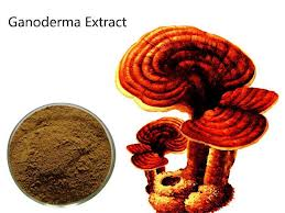 Health benefits of ganoderma extract